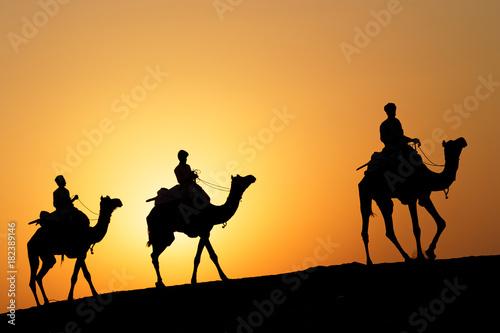 Fényképezés  Caravane de trois chameaux au soleil couchant