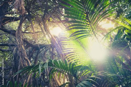 do-sypialni-wewnatrz-lasu-deszczowego-promienie