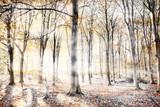 Szepczący las w jesieni - 182405705