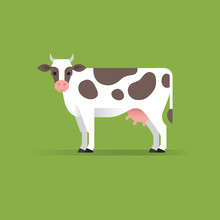 Vector Cow Illustration.
