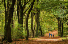 Menschengruppe Wandert Durch Buchenwald Im Herbst