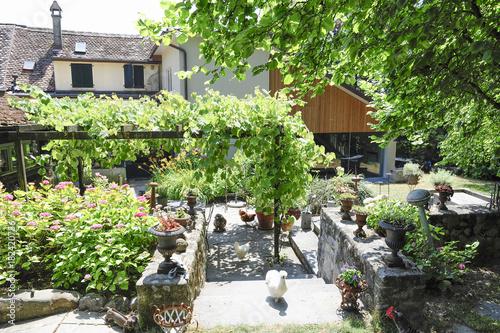 Cour intérieur et jardin d'une ancienne maison vigneronne avec vignes et poules se baladant librement sur la terrasse au milieu de la végétation