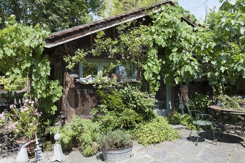 Cabane de jardin en bois recouvert de vigne et de rosiers en été et ...