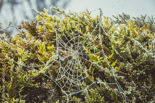 Foto op Plexiglas Bruin gefrorene Spinnweben gruselig zu Halloween
