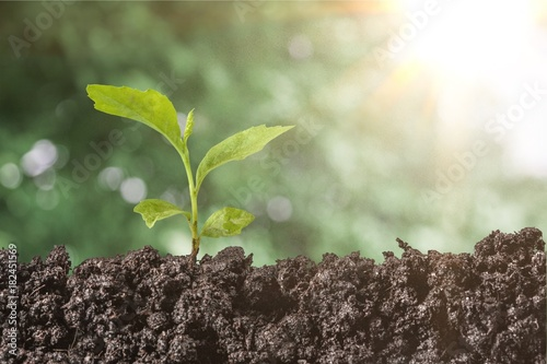 Garden Poster Plant Plant.