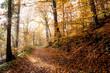 koenigswinter  Rheinsteig Wanderweg zum Petersberg im Herbst