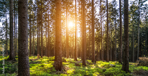 Garden Poster Forest Silent Forest in spring with beautiful bright sun rays
