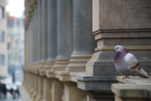 A Pigeon Seated On A Ledge Of ...