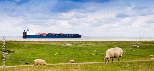 A container sheep on the river Elbe is passing sheeps on a dike near Cuxhaven, Germany
