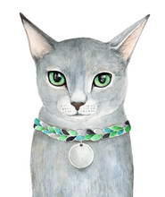 Russian Blue Domestic Grey Cat...
