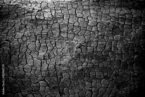 Foto op Canvas Brandhout textuur Burnt wood texture