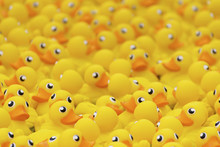 Yellow Toy Duck Floating In Sw...