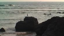1018. India. A Bird In Goa Beach
