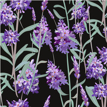 Vector Pattern With Lavender. ...