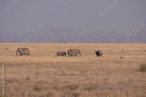 Aluminium Prints Zebra Elefanten in Afrika