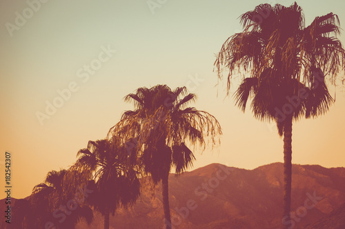 Stickers pour porte Palmier Row Of Palm Trees and Mountains at Sunset Palm Springs