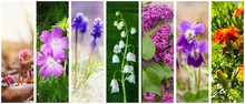A Collage Of Spring And Summer Flowers: Cyclamen, Lily Of The Valley, Lilacs, Marigolds, Violets And Geranium Forest (photo Mine)