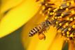 Leinwandbild Motiv Bee with flowers