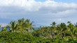 Pan around palm trees with puffy clouds and a bit of blue sky.