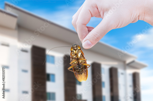 Woman's Hand holding cockroach on modern apartment background, eliminate cockroach in apartment and house