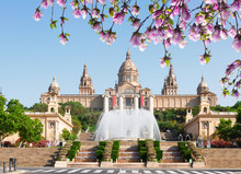 Square Of Spain - National Museum Of Barcelona With Fountain At Spring Day, Spain