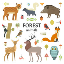 Vector Illustration Of Forest Animals: Elk, Doe, Hedgehog, Fox, Owl, Lynx, Skunk, Wild Boar, Woodpeckers And Other Birds, Isolated On Background.