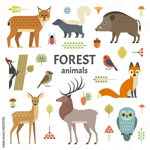 Fényképezés Vector illustration of forest animals: elk, doe, hedgehog, fox, owl, lynx, skunk, wild boar, woodpeckers and other birds, isolated on background