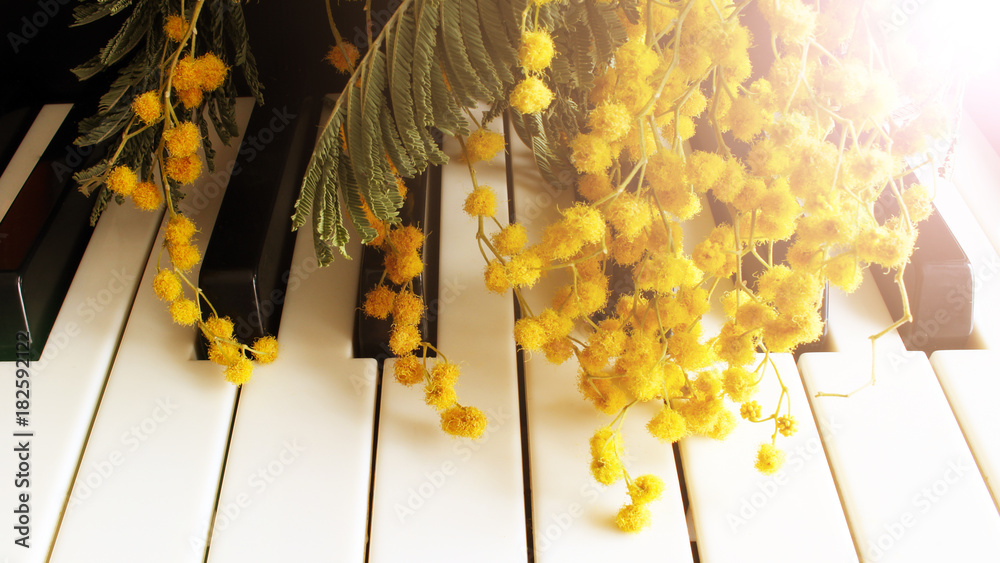 Fototapety, obrazy: A twig of mimosa on the piano. Spring music. Black and white keys