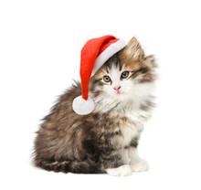 Small Kitten In Santa Christma...
