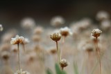 Wild Meadow - 182612900