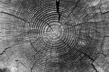 Old Tree Rings With Cracks Bla...