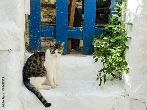 Chat dans le quartier d'Anafiotika, Plaka, Athènes