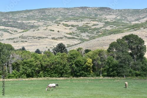 Fotografia  Jordanelle State Park in Wasatch County, Utah