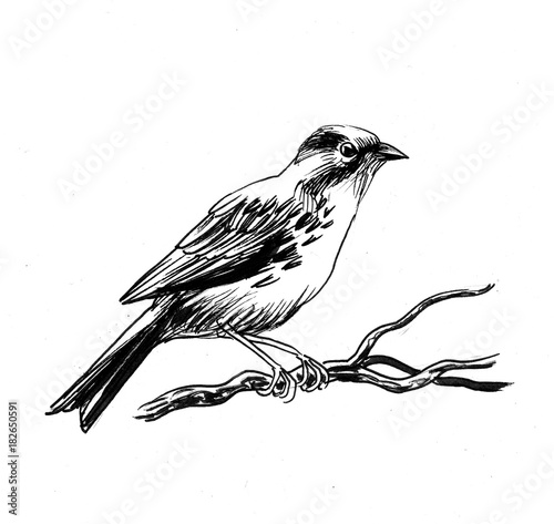 Sparrow bird on a tree branch. Black and white ink illustration. Wallpaper Mural