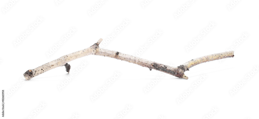 Dry birch branch isolated on white background