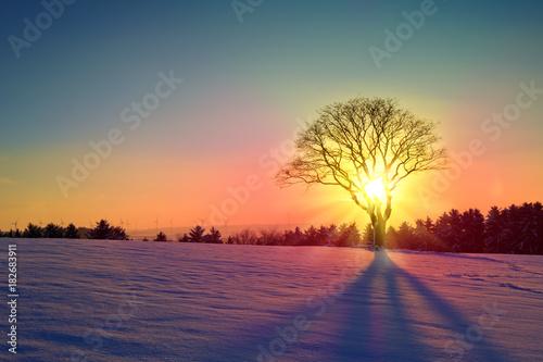 Obraz Winter sunset landscape with tree and snow field. - fototapety do salonu