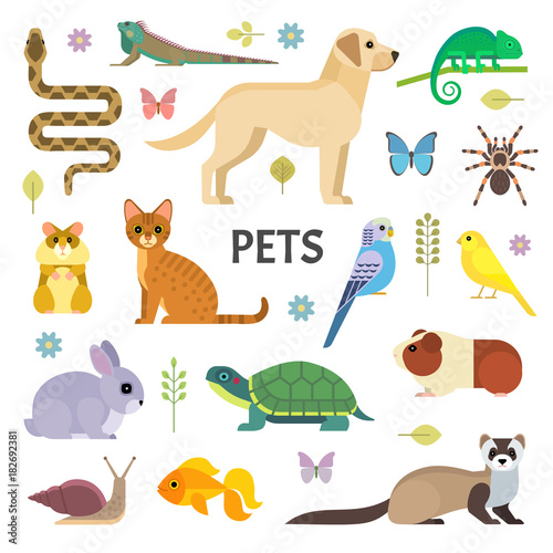 Fotografia Vector colorful collection of domestic mammals, rodents, insects, birds, reptiles, including dog, cat, rabbit, tortoise, ferret, parrot, snake, guinea pig, chameleon, hamster, tarantula and a canary