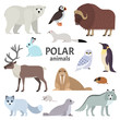 Polar animals. Vector collection of polar animals and birds, including polar bear, musk ox, seal, walrus, wolf, polar fox, reindeer, penguin and ermine, isolated on white.