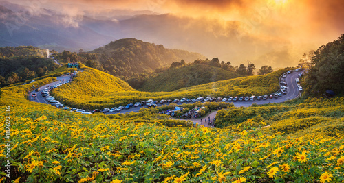 Papiers peints Orange The landscape sunset twilight of beautiful Mexican sunflower in Tung Bua Tong in Maehongson (Mae Hong Son) Province, Thailand.