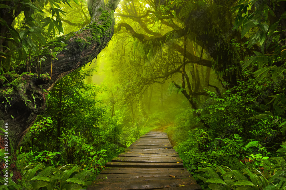 Fototapety, obrazy: Asian rainforest jungle