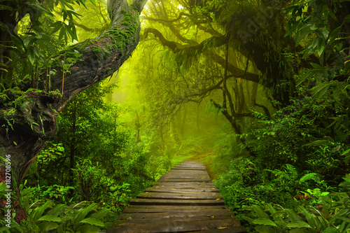 Fotobehang Bamboo Asian rainforest jungle