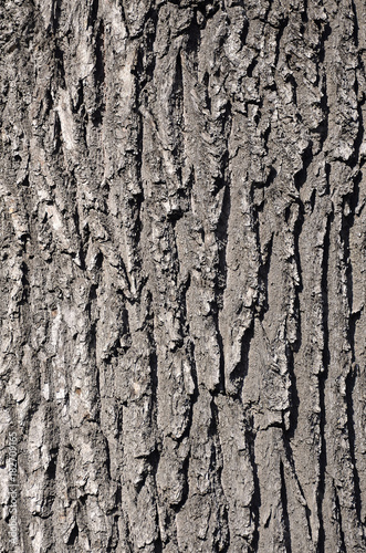 Fotografie, Obraz  Tree bark texture in sunlight