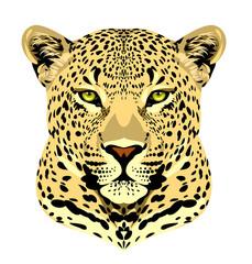 Fototapeta Pantera Portrait of a leopard
