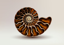 Realistic Vector Picture Fossil Ammonite Nacre Colour On Light Background. Pearly, Golden, Pure And Airy.
