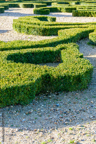 Fotografia  Partial view of boxwood trimmed in the shape of a fleur-de-lis in a french formal garden