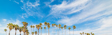 Palm Trees And Blue Sky In California