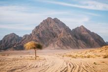 Tree In Sinai Desert With Rock...