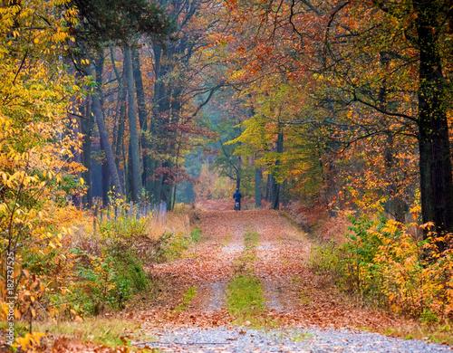 Aluminium Prints Autumn Paleta kolorów złotej jesieni w puszczy