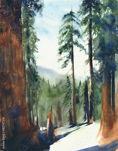 Cadres-photo bureau Brun profond Forest big trees Sequoia national park landscape Sierra Nevada mountains watercolor painting illustration