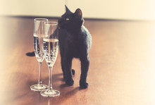 Black Cat And Champagne Vintage Grained Background. Good Luck Concept
